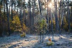 Forest sunrise Stock Photos