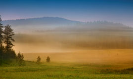Forest at sunrise. In the Rhodope Mountains in Bulgaria royalty free stock images