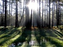 Forest Sunrise Shadows Stockbild