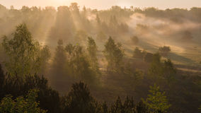 Forest in sunrise Stock Photos