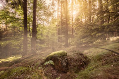 Forest sunrise Royalty Free Stock Images
