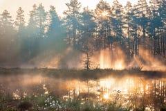 Forest sunrise Royalty Free Stock Photo