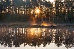 Forest sunrise Royalty Free Stock Image
