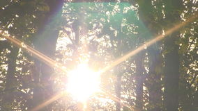 Forest sunrise timelapse. Spring time. stock footage