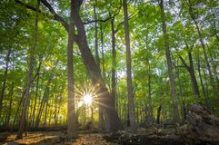 Forest Sunrise Tree Foliage Northern Illinois fotografia stock
