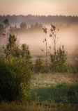 Forest at sunrise Royalty Free Stock Photo