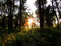 Forest. Sunrise in the woods by the river Stock Photo