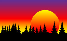 Forest at sunset. Landscape, forest at sunset - illustration Royalty Free Stock Photography