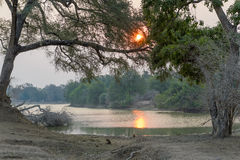 Forest Sunset Fotografía de archivo