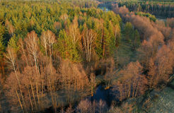 Forest on sunset. View to the forest in sunset, Russia Royalty Free Stock Image