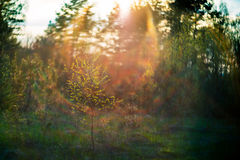 Forest at sunset afternoon. And sun shine, early spring Royalty Free Stock Images