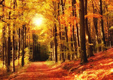 Forest sunset in autumn Stock Photos