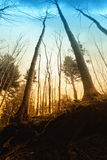 Forest at sunset Royalty Free Stock Photography