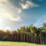 Forest and sunset Stock Photography