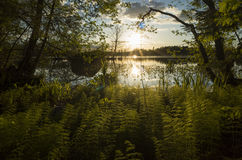 Forest Sunset And A Lake In Sweden. A photo Forest Sunset And A Lake In Sweden Royalty Free Stock Photos