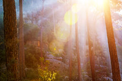 Forest in sunset light stock photos