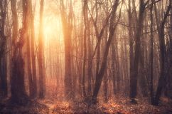 Forest in sunset royalty free stock image