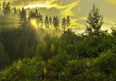 Forest sunset Royalty Free Stock Photography