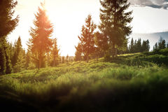 Forest with sunset in Poland. Stock Images