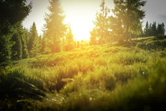Forest with sunset in Poland. Royalty Free Stock Images