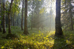 The forest at sunset, Russia Royalty Free Stock Photography