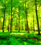 Forest sunshine Royalty Free Stock Photography