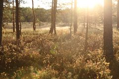 Forest sunshine Royalty Free Stock Photos