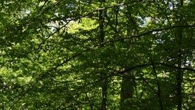 Forest Survey stock videobeelden