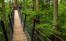 Forest Suspension Bridge Stock Photos