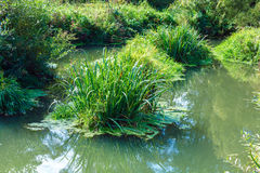 Forest Swamp with Bright Green Plants and Grass Stock Photography