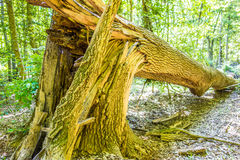 Forest and swamp of Congaree National Park in South Caro Stock Image