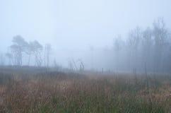 Forest on swamp in dense fog. Drenthe, Netherlands Royalty Free Stock Photos