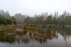 Forest swamp, lake in fog. Autumn countryside landscape Stock Images