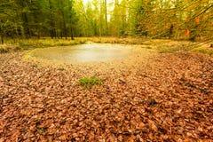 Forest swamp landscape Stock Images