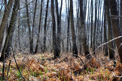 Forest swamp Stock Images