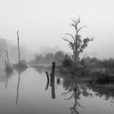 Forest swamp scene Royalty Free Stock Image