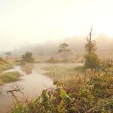 Forest swamp scene Stock Photo