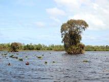 Forest swamp scene Stock Image