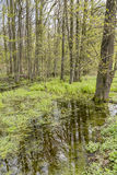 Forest with swamp Royalty Free Stock Images