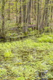 Forest with swamp Royalty Free Stock Photos