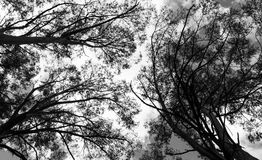 Forest. Swaying tree branches in the forest Royalty Free Stock Photography