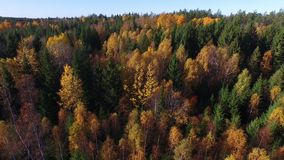 Forest in Sweden. Beautiful forest in Sweden, autumn stock video