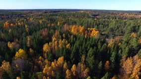Forest in Sweden in fall. Aerial footage of forest in Sweden in fall stock footage