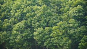 Forest swing in wind. stock footage