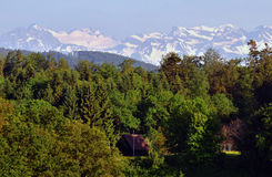 Forest and Swiss Alps Stock Photography
