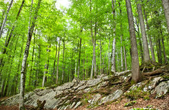 Forest in Switzerland. Beautiful, green wood in Switzerland Royalty Free Stock Photos