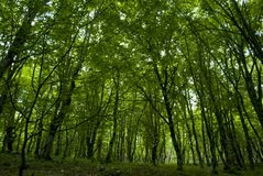 Forest in Syunik province Armenia. Syunik was the ninth province of the Kingdom of Armenia from 189 BC until 428 AD. In 821, it formed the Armenian principality Royalty Free Stock Photography