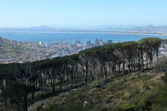 The forest at the Table Mountain of Cape Town Royalty Free Stock Photos