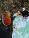 Forest Tea Fotografía de archivo