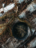 Forest Tea Foto de archivo libre de regalías